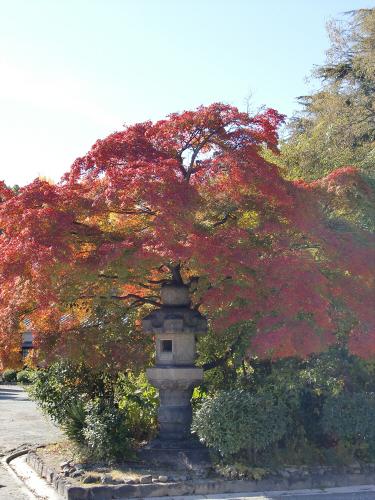 大阪城の紅葉2012-32