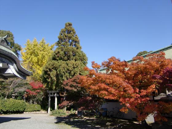 大阪城の紅葉2012-33