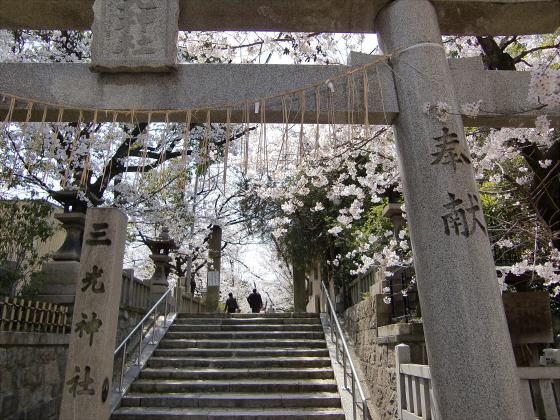 三光神社の桜2013-01