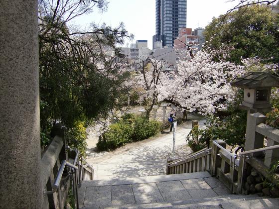 三光神社の桜2013-06