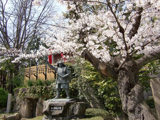三光神社の桜2013-08