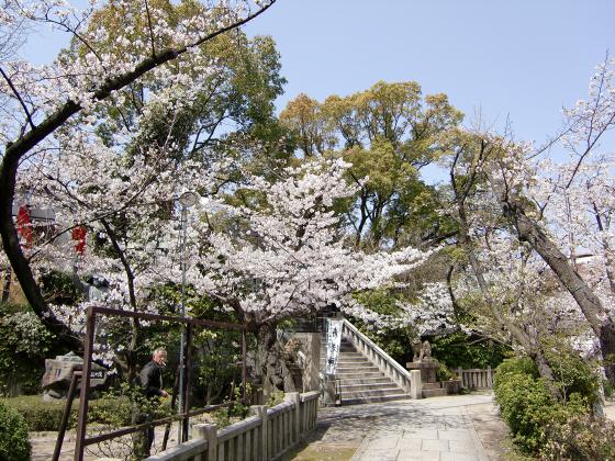 三光神社の桜2013-09