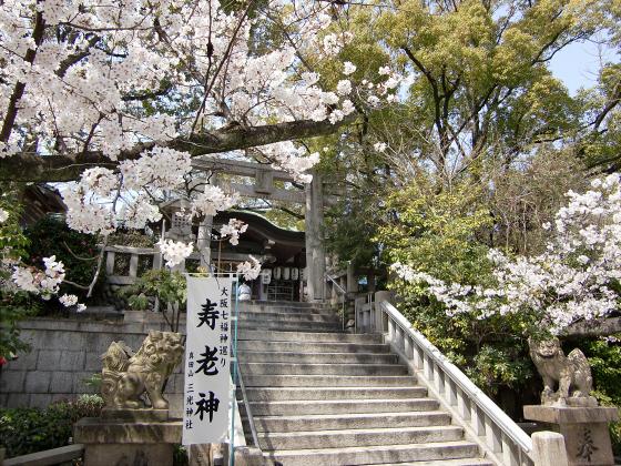 三光神社の桜2013-10