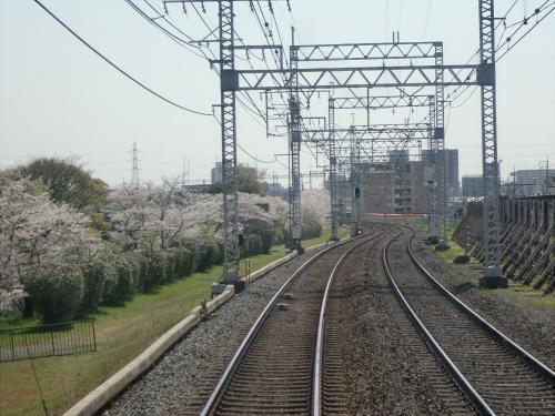 桜・京阪・かぶりつき02