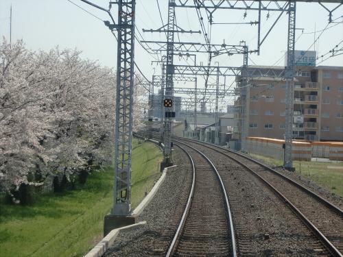 桜・京阪・かぶりつき03