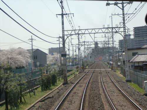 桜・京阪・かぶりつき11