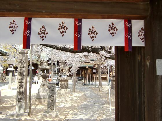 天下茶屋の聖天さんの桜03