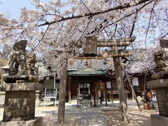 天下茶屋の聖天さんの桜05