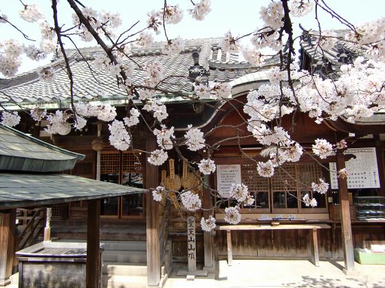 天下茶屋の聖天さんの桜06
