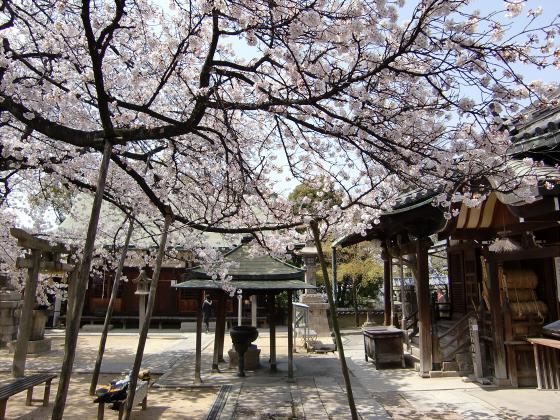 天下茶屋の聖天さんの桜10