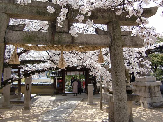 天下茶屋の聖天さんの桜18