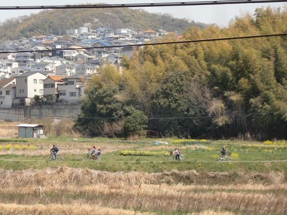 京阪トーマス号2013と桜その1-03