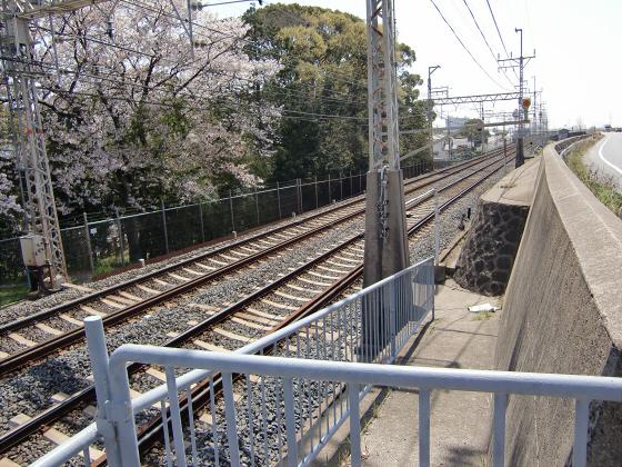 京阪トーマス号2013と桜その1-04