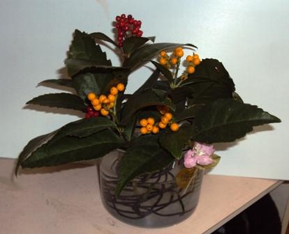 千両の生け花
