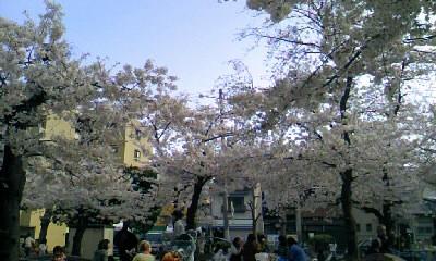 寺田町公園花見
