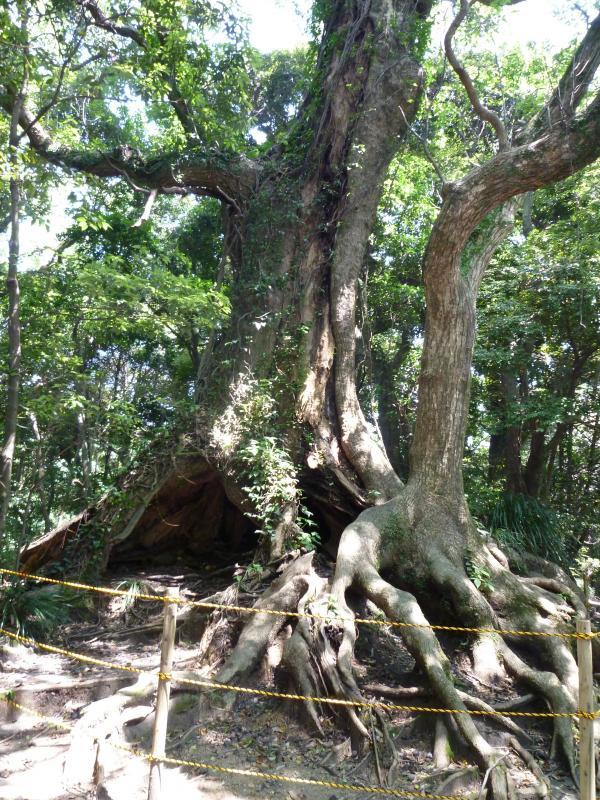 思い出の木