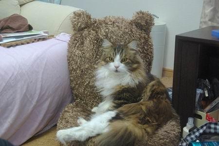 レオさんonくまちゃん座椅子