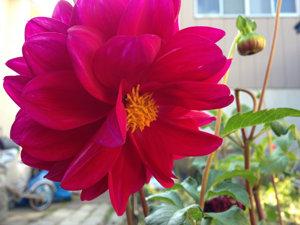 20141020 庭の花