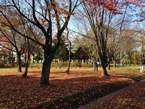 20141023 北見の秋
