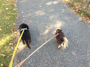 20141023 犬の散歩