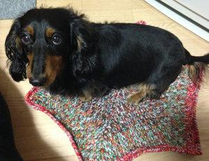 20141121 不要な糸でミニ絨毯 犬用