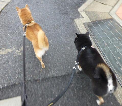 元気にお散歩