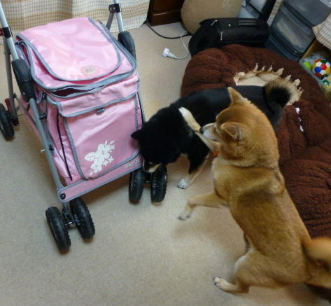 超小型犬カート