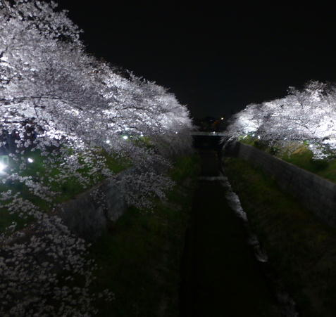2013 山崎川