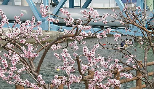 第8回アーモンド並木と春の音楽会-1