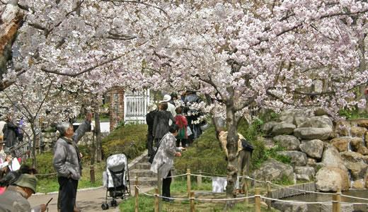 岡本南公園観桜会2010-1