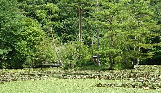 9月の高山植物園と森林植物園-2