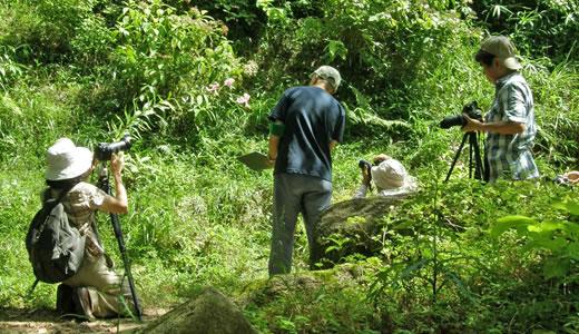 9月の高山植物園と森林植物園(2)-1