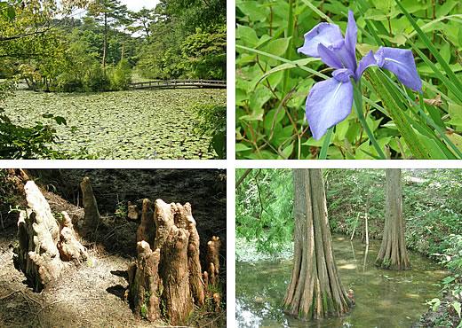 9月の高山植物園と森林植物園(5)