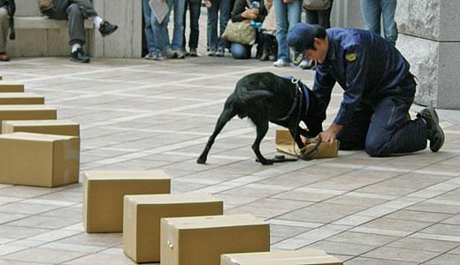 神戸税関庁舎特別公開2010(3)-1