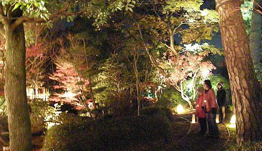 甲子園会館ライトアップ2010-3