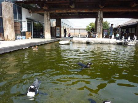 ペンギン池