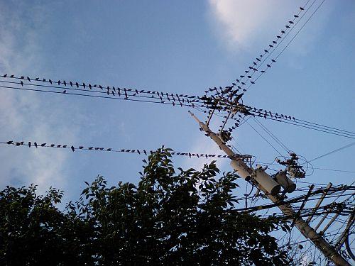 ぎょうさんの鳥