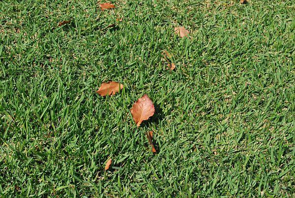 芝生がきれいや