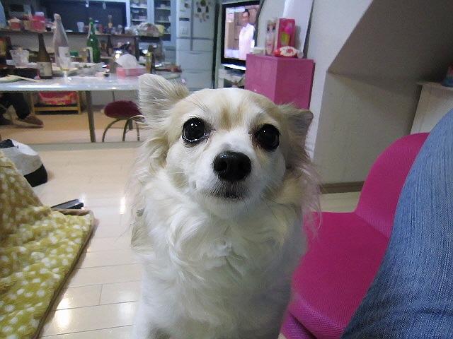 2013.1.3姉宅で新年会&ワンちゃん達(*^_^*)