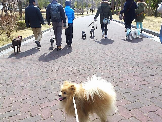 2013.2.24初参加のワン歩会@しあわせの村♪