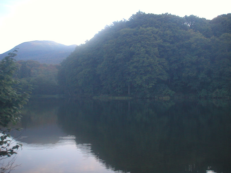 宿の裏手の池