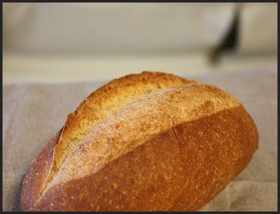 2008/12/13ドンクのパン2