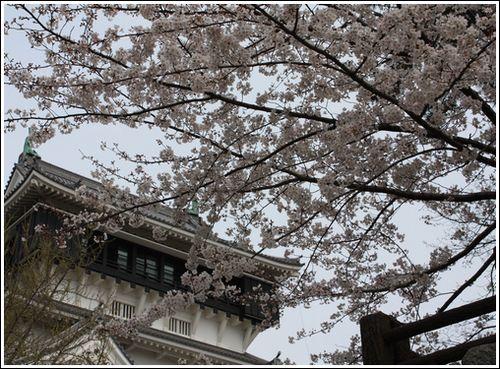 2009/3/29花見2