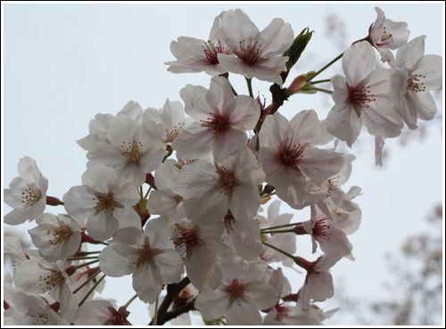 2009/3/29花見3
