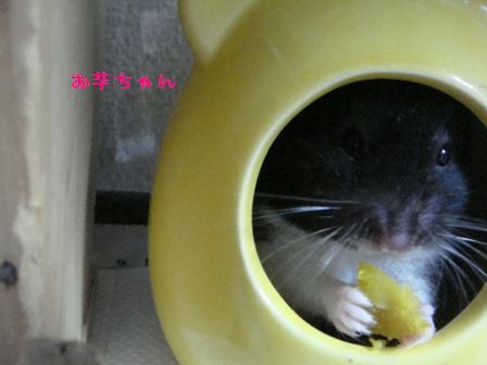 お芋ちゃん♪