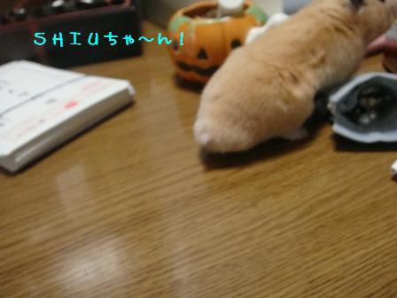 SHIUちゃ~ん!