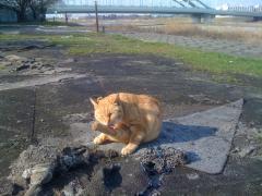 多摩水道橋付近の人懐こい猫