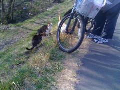 野良猫@多摩川2