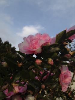 ☆ファームの花