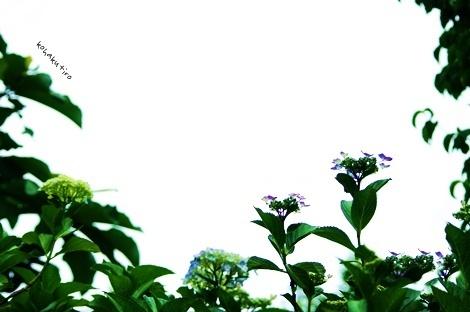 gaku_20130615000900.jpg
